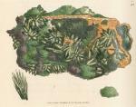 image sowerby j_mineralogy v1_1804_plate 93