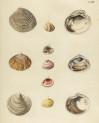 image mendes da costa, e_historia naturalis_1778_pl12