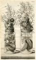 image ruysch f_thesaurus animalium_1710_plate 6