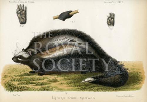 image nouvelles archives du museum_v3_1867_plate 6