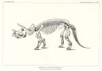 image marsh o c_dinosaurs_1896_plate 71