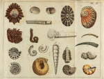 image mendes da costa, e_elements of conchology_1776_pl2_copy