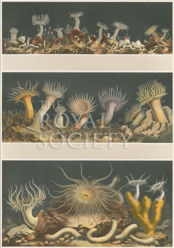 image a andres_le attinie_1884_plate 2