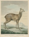 image shaw, g_museum leverianum_1792_plate 3