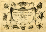 image hoefnagel d i_diversae insectarum_plate 1