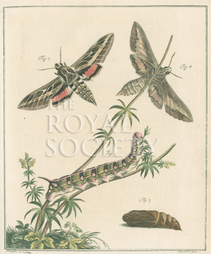 image fuessly_archiv der insect_plate 3