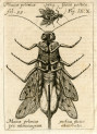 image miscellanea curiosa_1685_figs 9-10