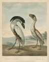 image shaw, g_museum leverianum_1792_plate 45
