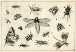 image hoefnagel d i_diversae insectarum_plate 11
