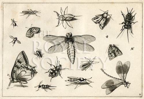 image hoefnagel d i_diversae insectarum_plate 11