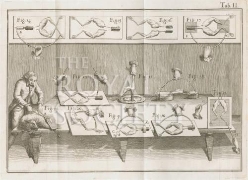 image Galvani, A_De viribus electricitatis_1792_TabII