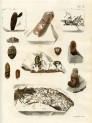 image mantell g_fossils_1822_plate 9