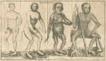 image Linnaeus, C_Amoenitates academicae_vol 6, 1763_p76