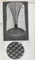 image hooke_micrographia_1665_schem xxi