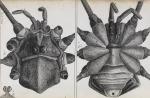 image hooke_micrographia_1665_schem xxxi