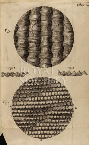 image hooke_r_micrographia_052