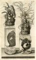 image ruysch f_thesaurus animalium_1710_plate 7