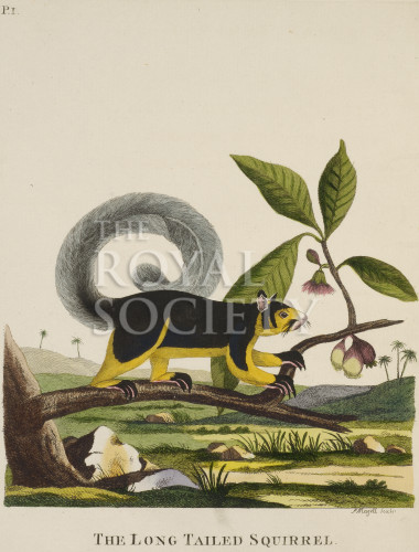 image pennant t_ indian zoology_plate 1