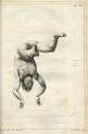 image bernardi, o de_l_uomo galleggiante_1794_plate xvi