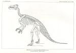 image marsh o c_dinosaurs_1896_plate 85