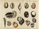 image mendes da costa, e_elements of conchology_1776_pl3 copy