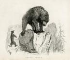 image richardson j_fauna boreali-americana_1829_plate 1