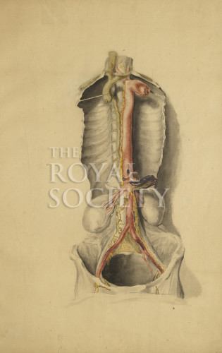 Anatomical Study Of The Thoracic Duct Royal Society Picture Library
