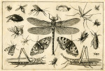 image hoefnagel d i_diversae insectarum_plate 2