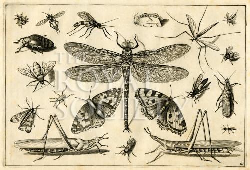 image hoefnagel d i_diversae insectarum_plate 2
