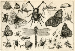 image hoefnagel d i_diversae insectarum_plate 12