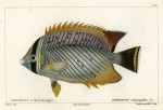 image cuvier g_histoire_poissons_plate 172