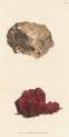 image sowerby j_mineralogy v1_1804_plate 100