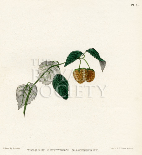 image emmons e_agriculture of new york_1851_plate 61