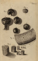 image hooke_r_micrographia_096