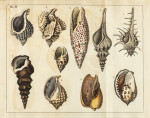image mendes da costa, e_elements of conchology_1776_pl4 copy