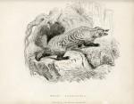 image richardson j_fauna boreali-americana_1829_plate 2
