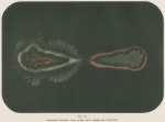 image armstrong w g_supplement---electric movement_plate 8