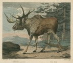 image shaw, g_museum leverianum_1792_plate 8