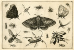 image hoefnagel d i_diversae insectarum_plate 3