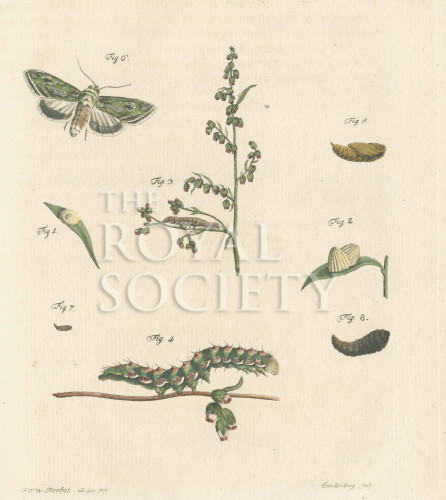 image fuessly_archiv der insect_plate 5