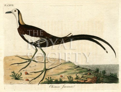 image latham j_supplement_1787_plate 117