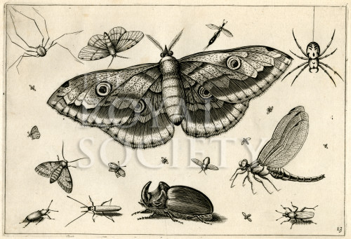 image hoefnagel d i_diversae insectarum_plate 13