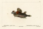 image cuvier g_histoire_poissons_plate 80