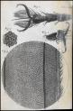 image hooke_micrographia_1665_schem xxiii