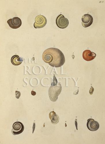 image mendes da costa, e_historia naturalis_1778_pl5