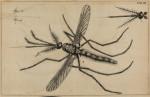 image swammerdam_j_1669_historia_insectorum_plate_3