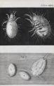 image hooke_micrographia_1665_schem xxxvi