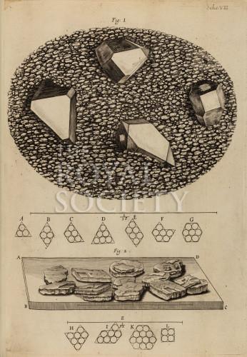 image hooke_r_micrographia_138