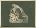 image fox, j_the natural history of the human teeth_1803_plate4