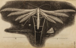 image hooke_r_micrographia_298